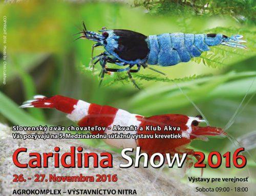 Caridina show Nitra, 2016