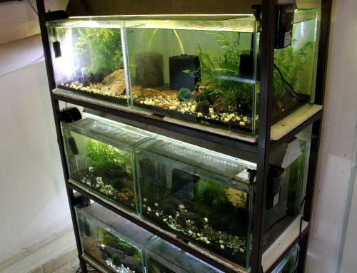 Akváriumaim – 2019 ősz