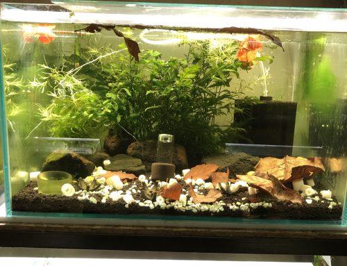 Akvárium (újra)indítás